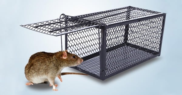 2020 - год стальной крысы